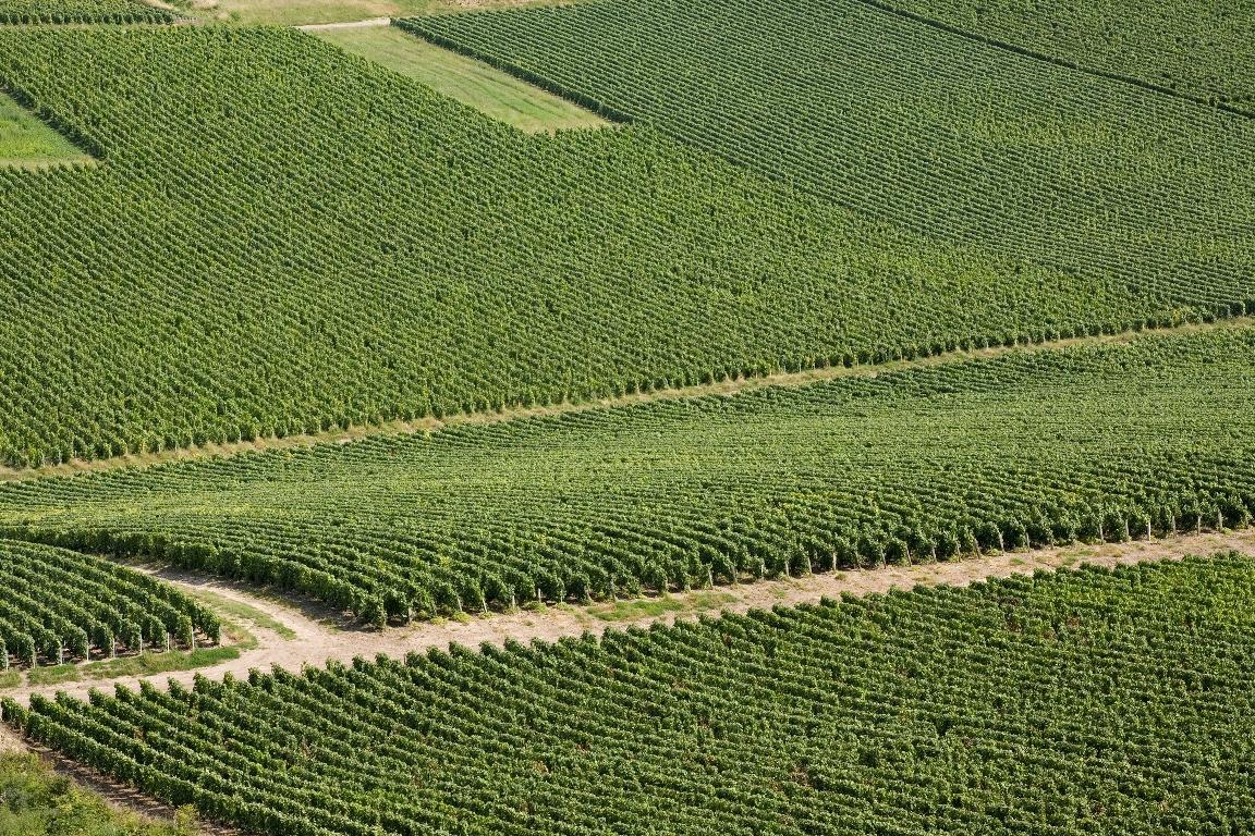 Parcelles de vignes